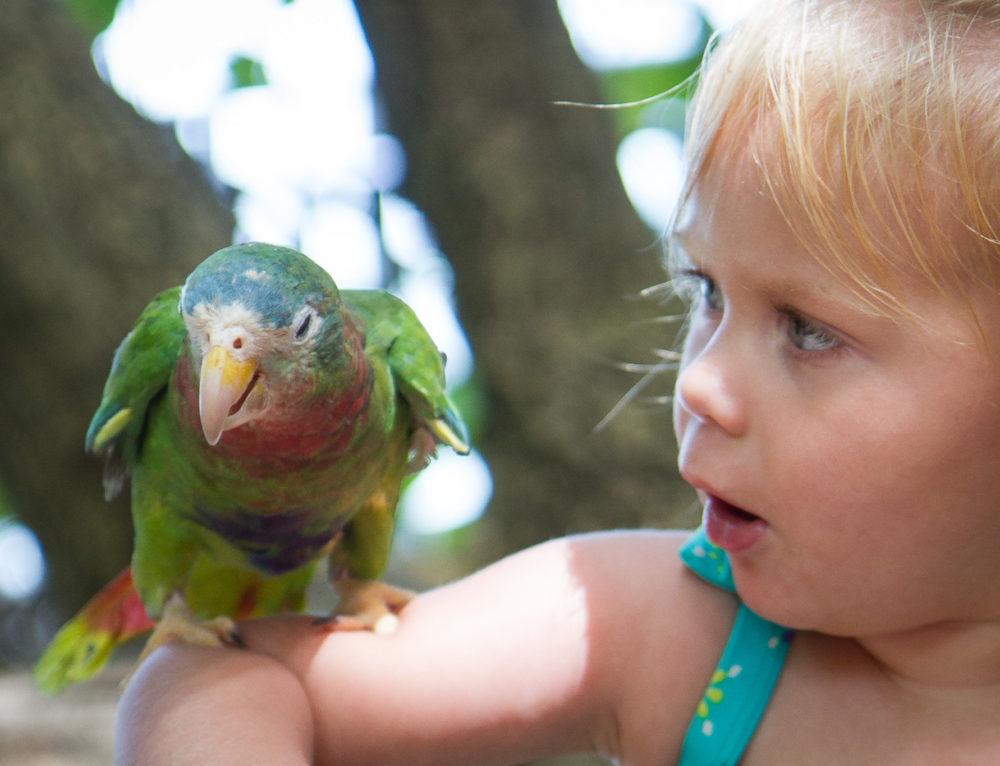Papagájok kisgyerekeknek?